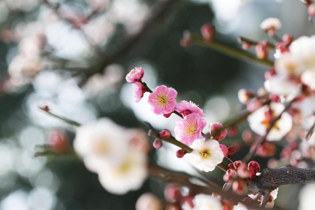 梅の風景写真